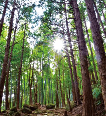 木材調達におけるガイドライン