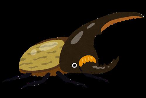 bug_kabutomushi_hercules